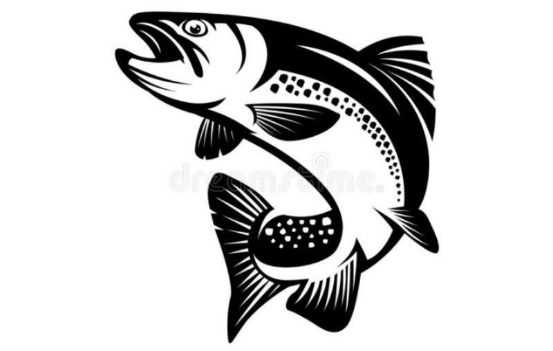 Veer Fresh Fish