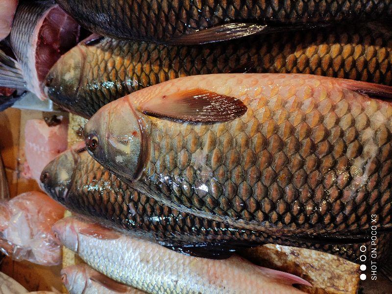 Vishwanath Fish Shop