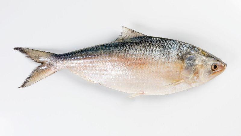 Biswas Fish Shop