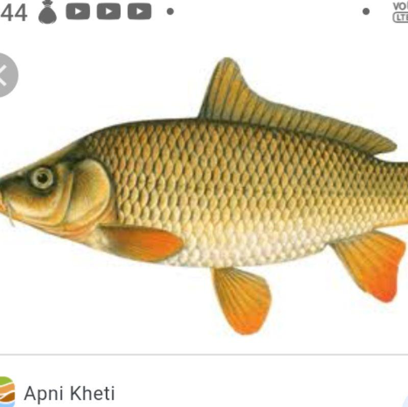 Anmol Local Fish Sells🐠🦐🦈🐬🐟🐟🐠🦐