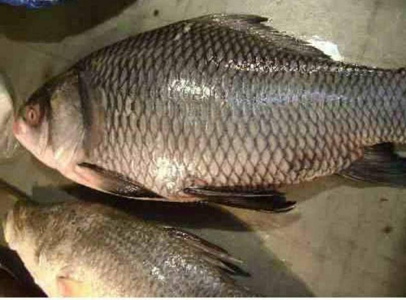 Fish Bazar