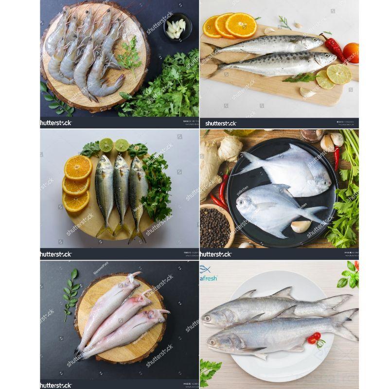 FRESH FISH SUPPLIERS