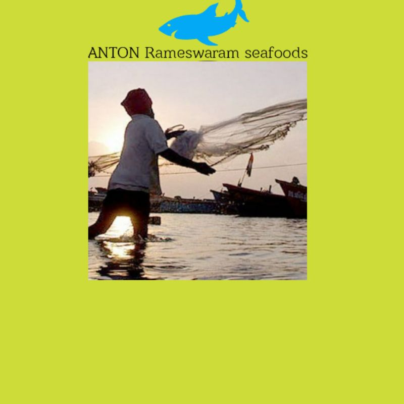 ANTON Rameswaram Seafoods & HYGENIC MEATS